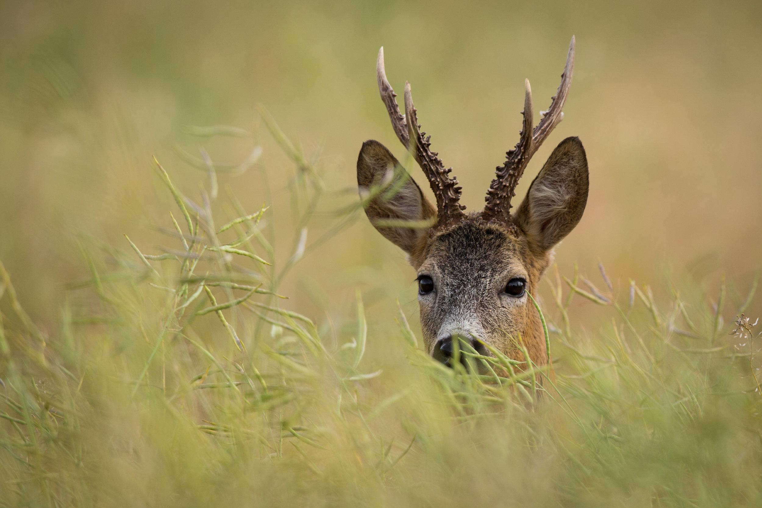 - Deer stalking