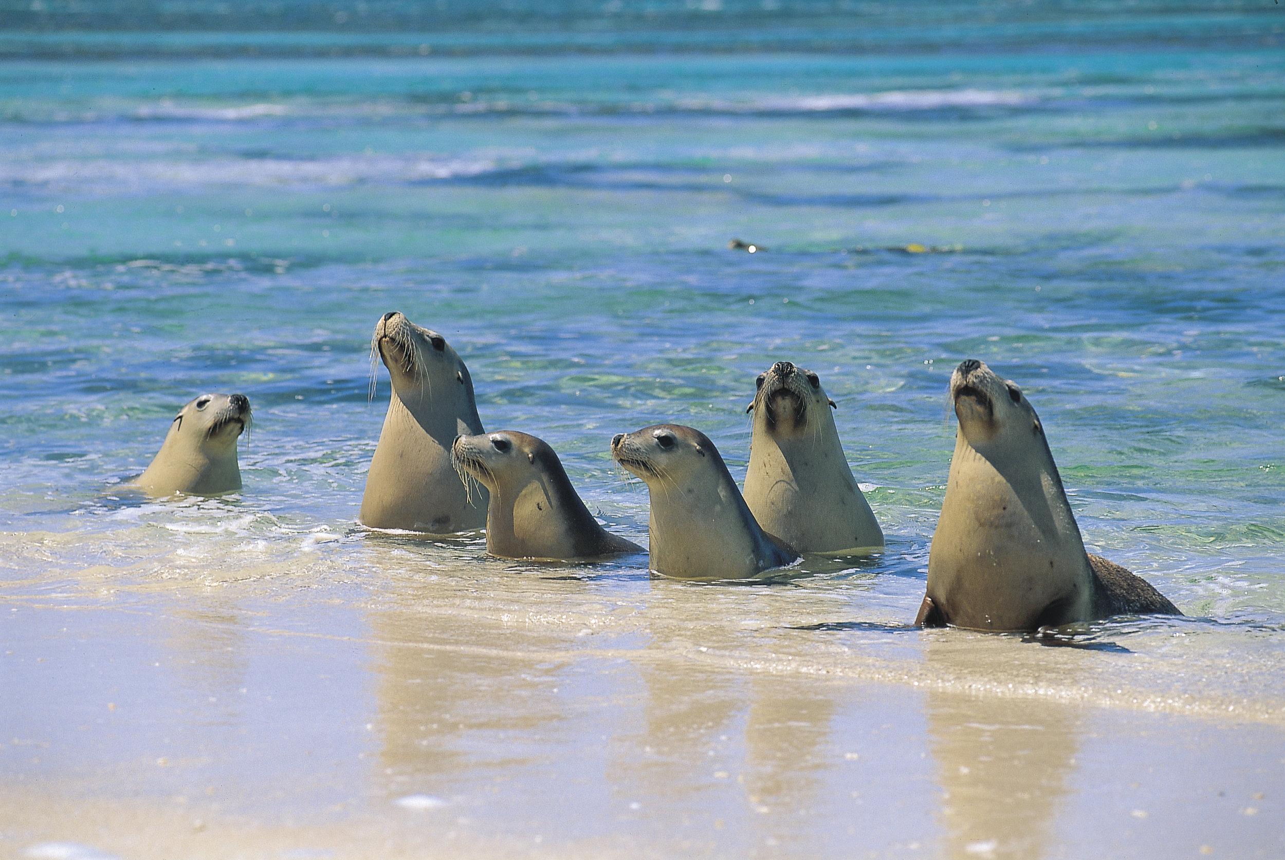 Sea Lions - Scott Bilby.jpg