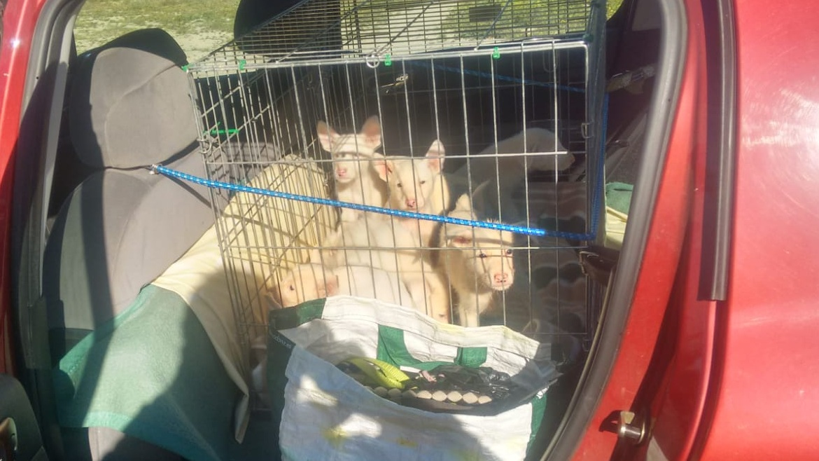 Puppies traveling to the centre 5/1/19