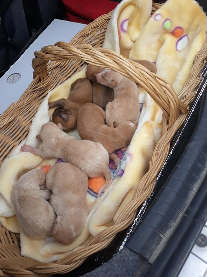 Puppies arriving to the centre 9/2/19