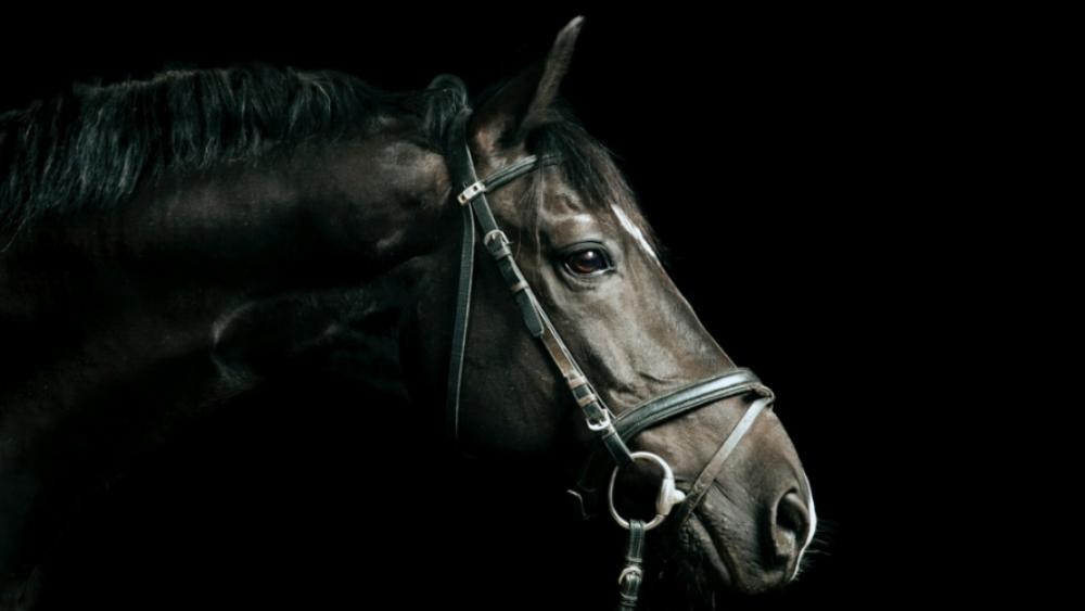 black-horse-portrait-picture-id171114680.jpg