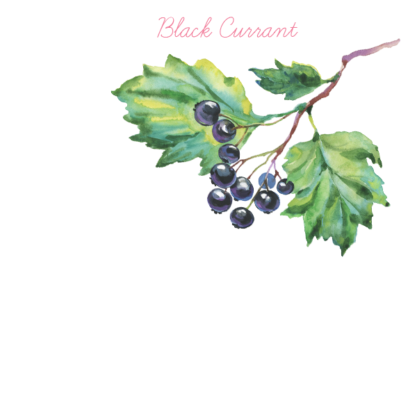 black currant p.png