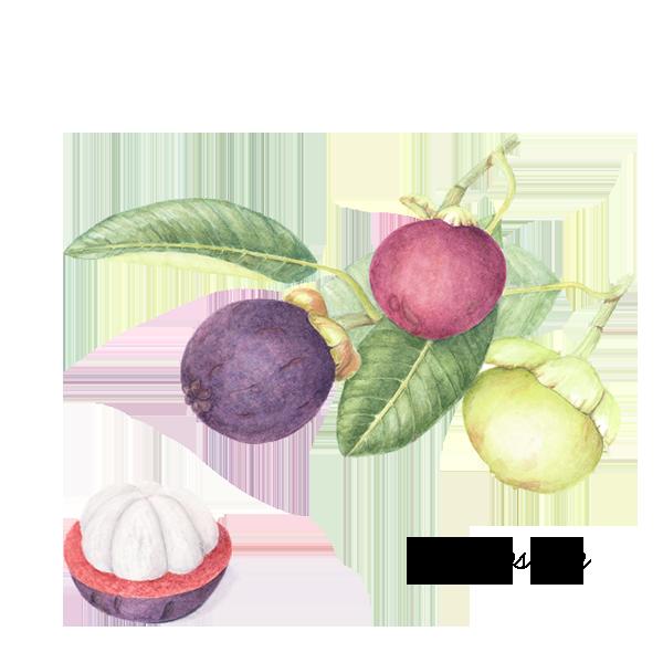 mangosteen.png