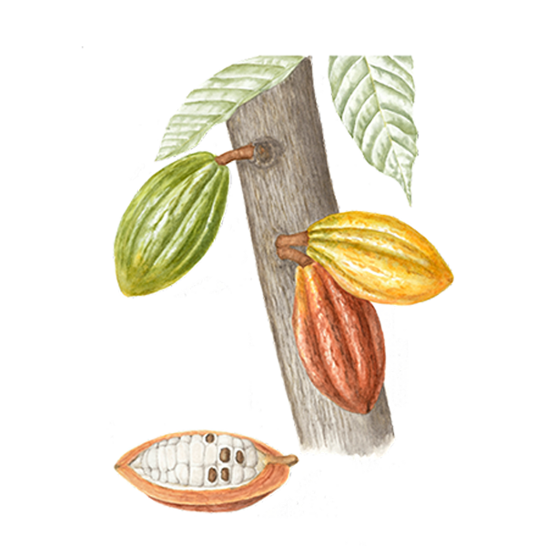 Cacao Ingredients.png