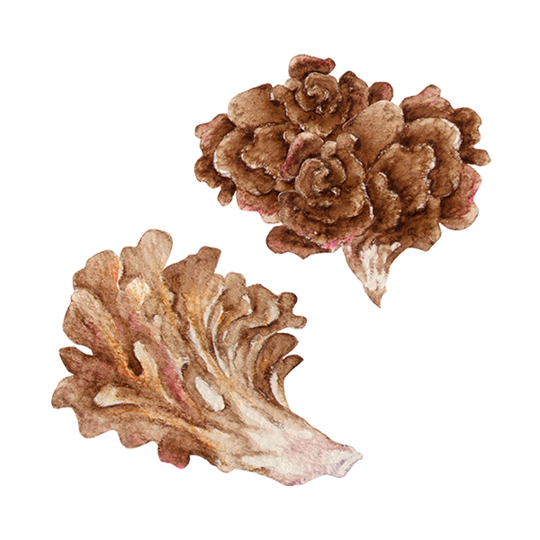 Maitake Ingredients.png