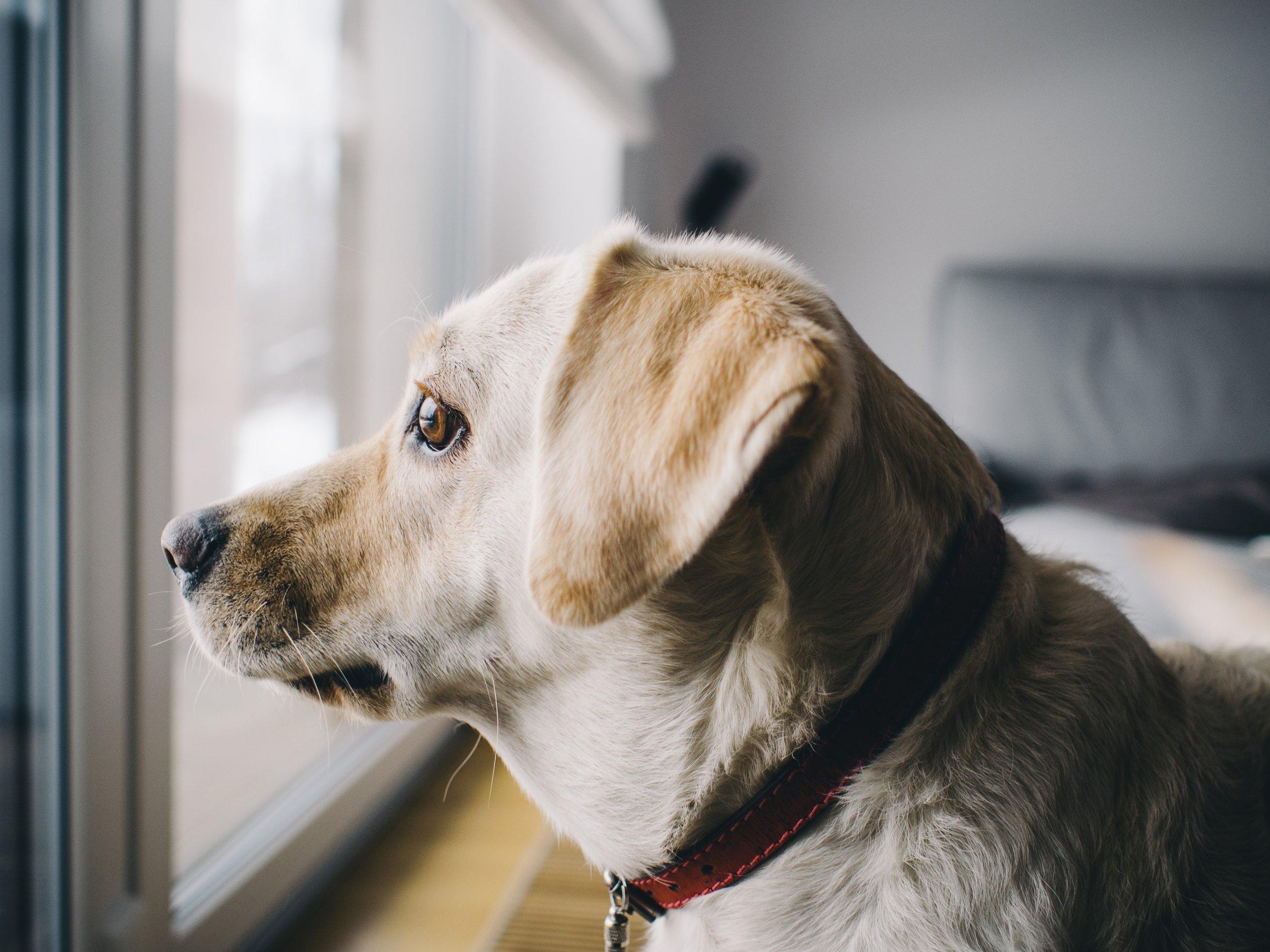 dog-926220.jpg