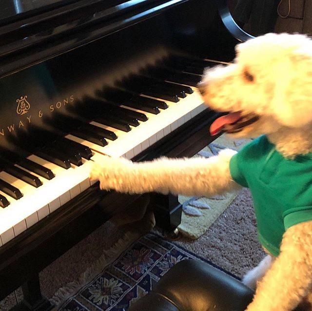 Roscoe's got it! His first solo! #dogs #musictherapy #ilovemydog #dogrelaxationmusic #classicalmusic #bach #mozart #cats #veterinarymedicine #kennelclub  #doggydaycarelife