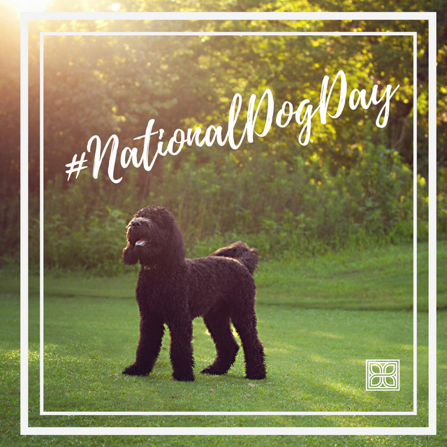 National Dog Day - It's National Dog Day! For my whole life I've been an animal lover. My close friends make fun of my insane attachment to my animals on the reg. In fact, I'll let you in on a secret. If I meet someone that declares they