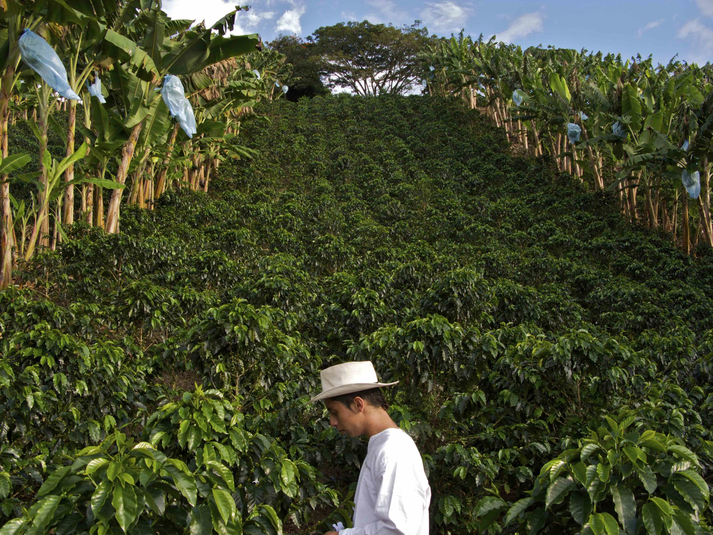 Colombian Coffee Country