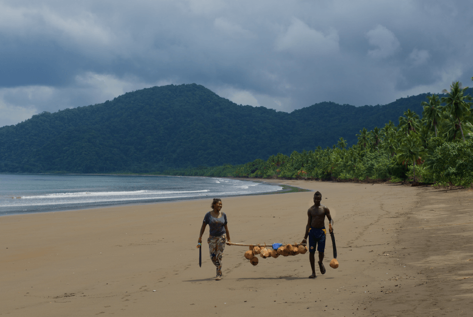 Community members from Nuqui collecting coconuts on near endless stretches of virgin beach.