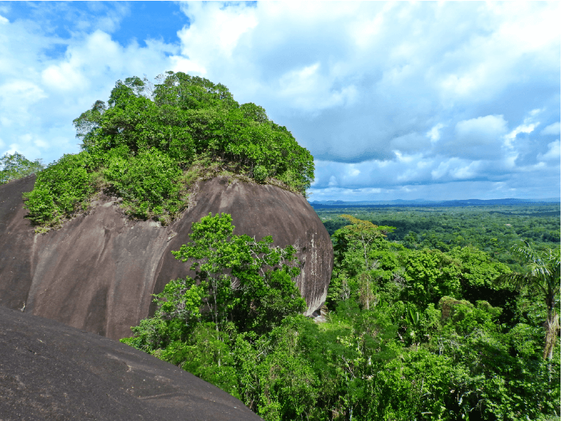 The jungles of Mitú are full of giant rocks, remnants of the ancient Guiana Shield, which offer stunning panoramic views of the rainforest and are an important home for the Guianan Cock-of-the-Rock