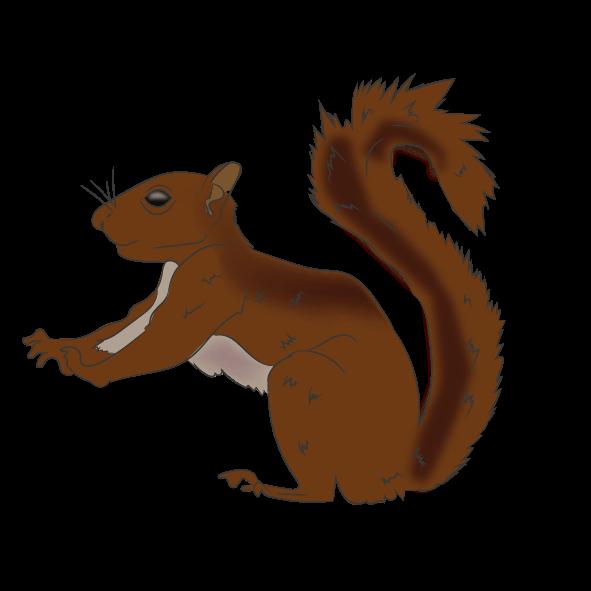 Andean Squirrel