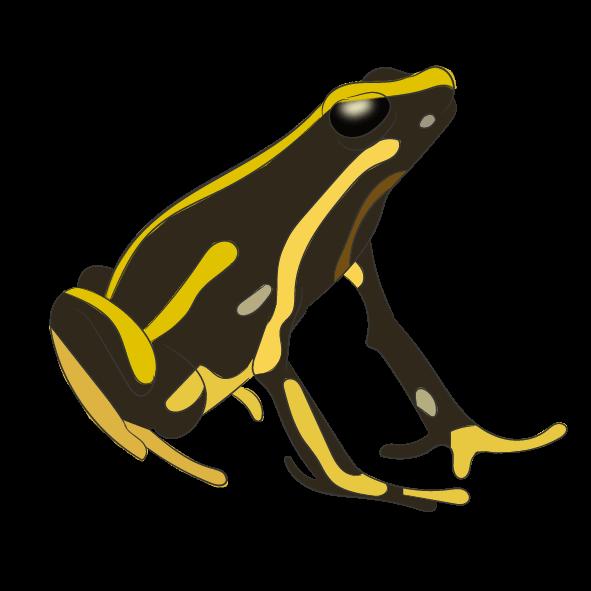Yellow-striped Poison Frog