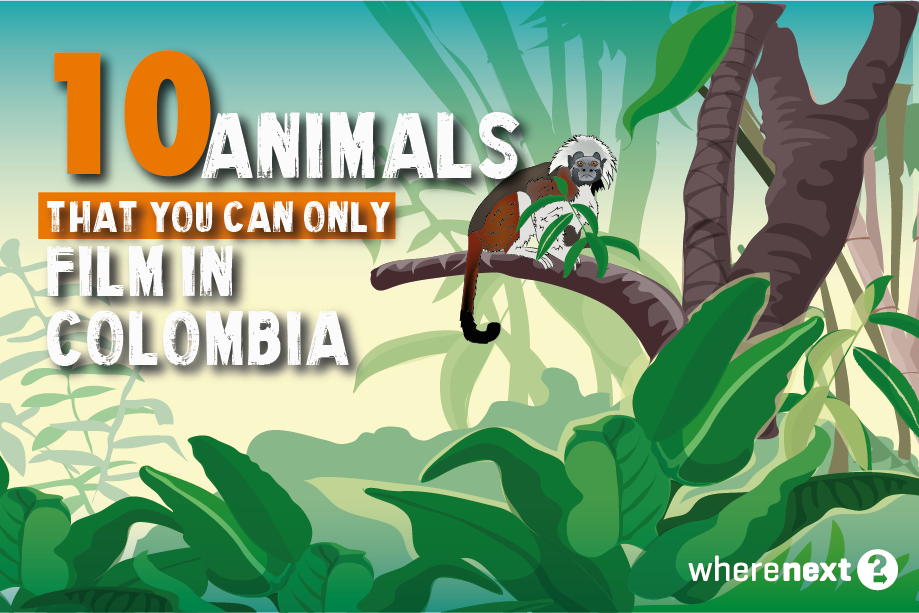 Animals-film-in-colombia
