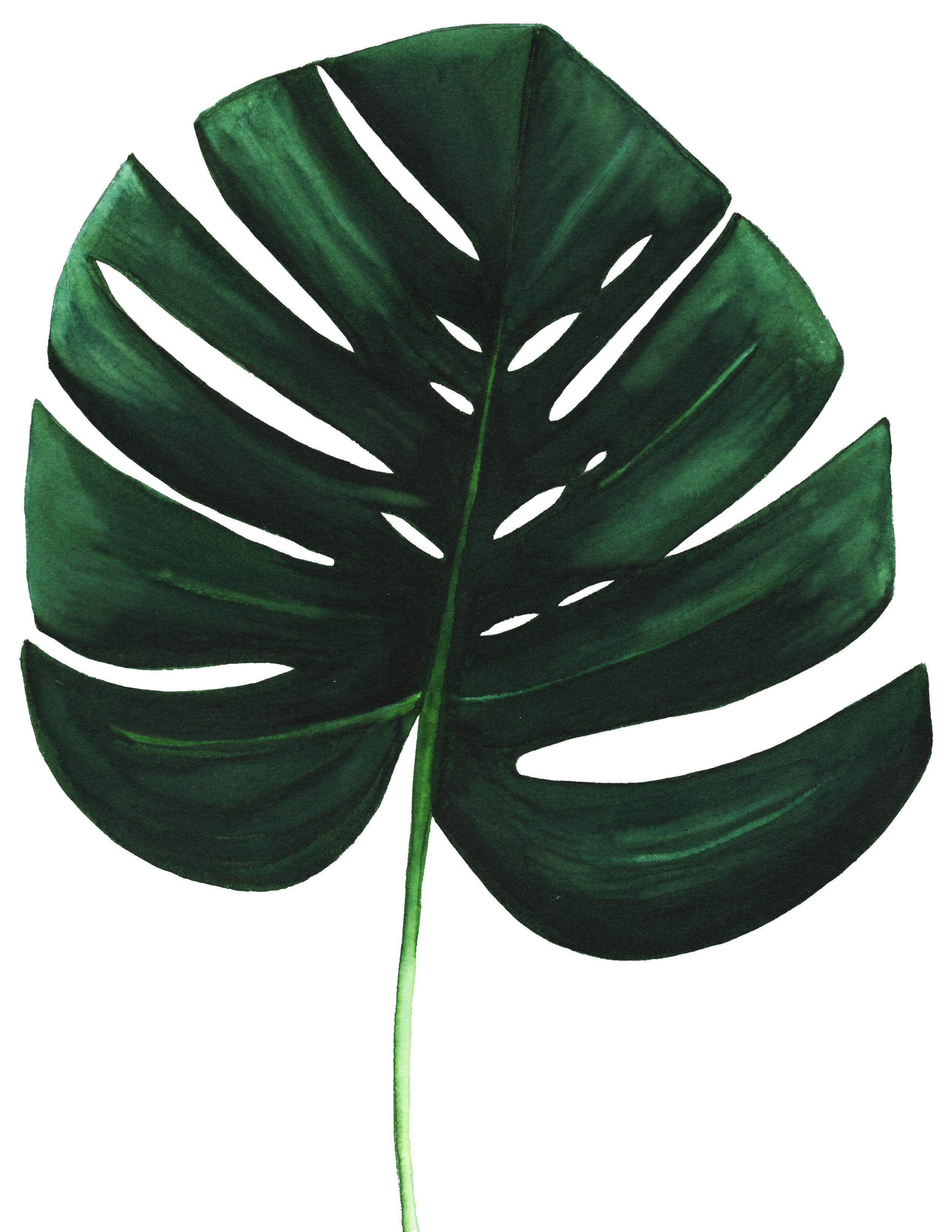 Edited Leaf.jpg