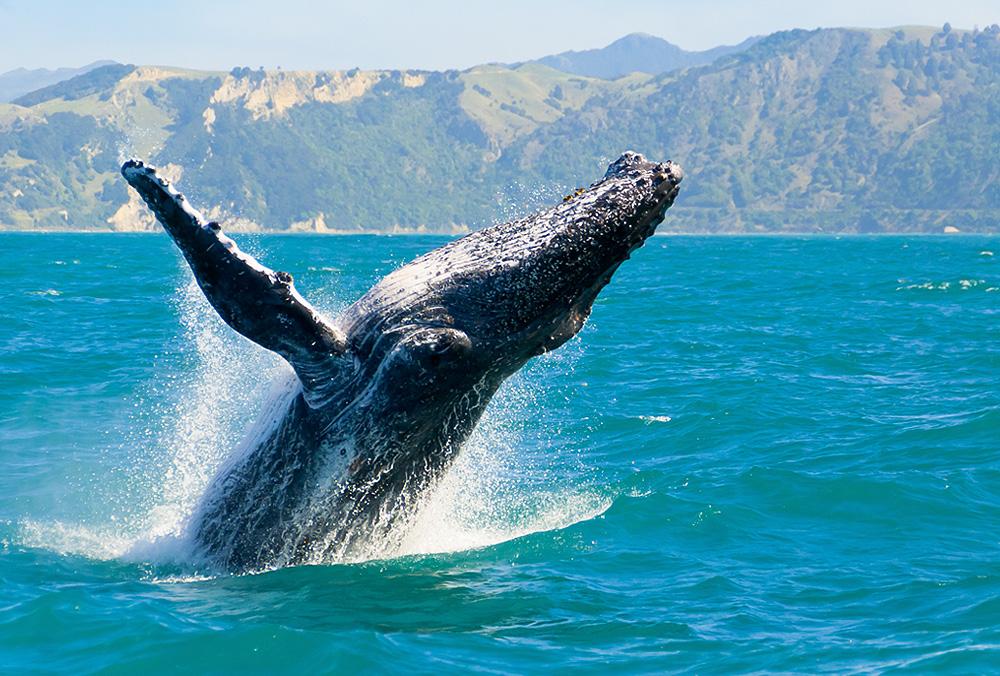 BAJAS-whalewatchingtour.jpg