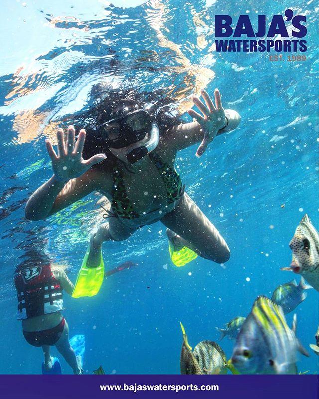 Snorkeling at Pelican Rock! #cabo #snorkel #bajasteam #sealife