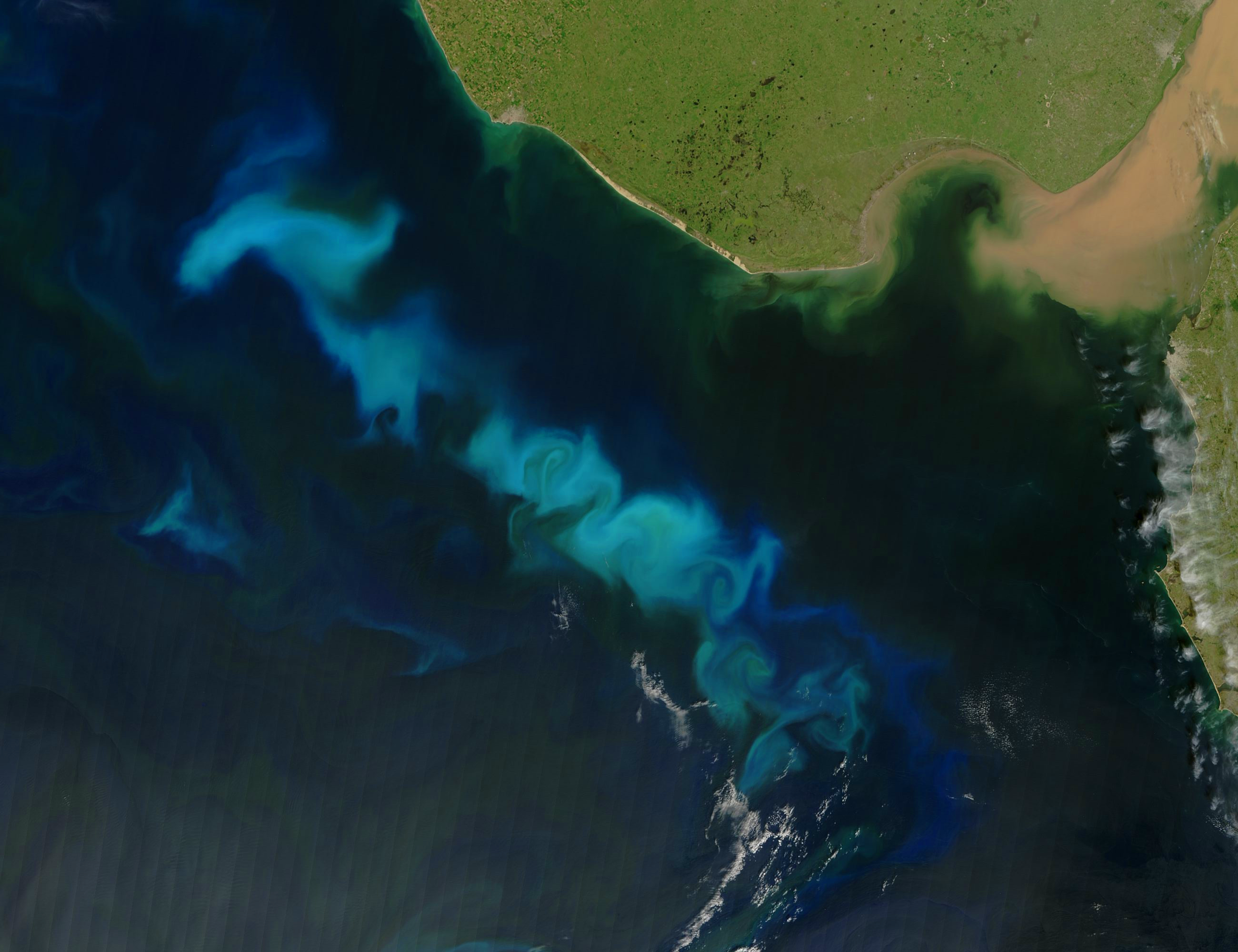 A phytoplankton bloom off the Argentine coast. Such events may be triggered by massive nutrient influxes from human activity (Photo Credit: Jeff Schmaltz, MODIS Land Rapid Response Team at NASA GSFC   NASA Earth Observatory).