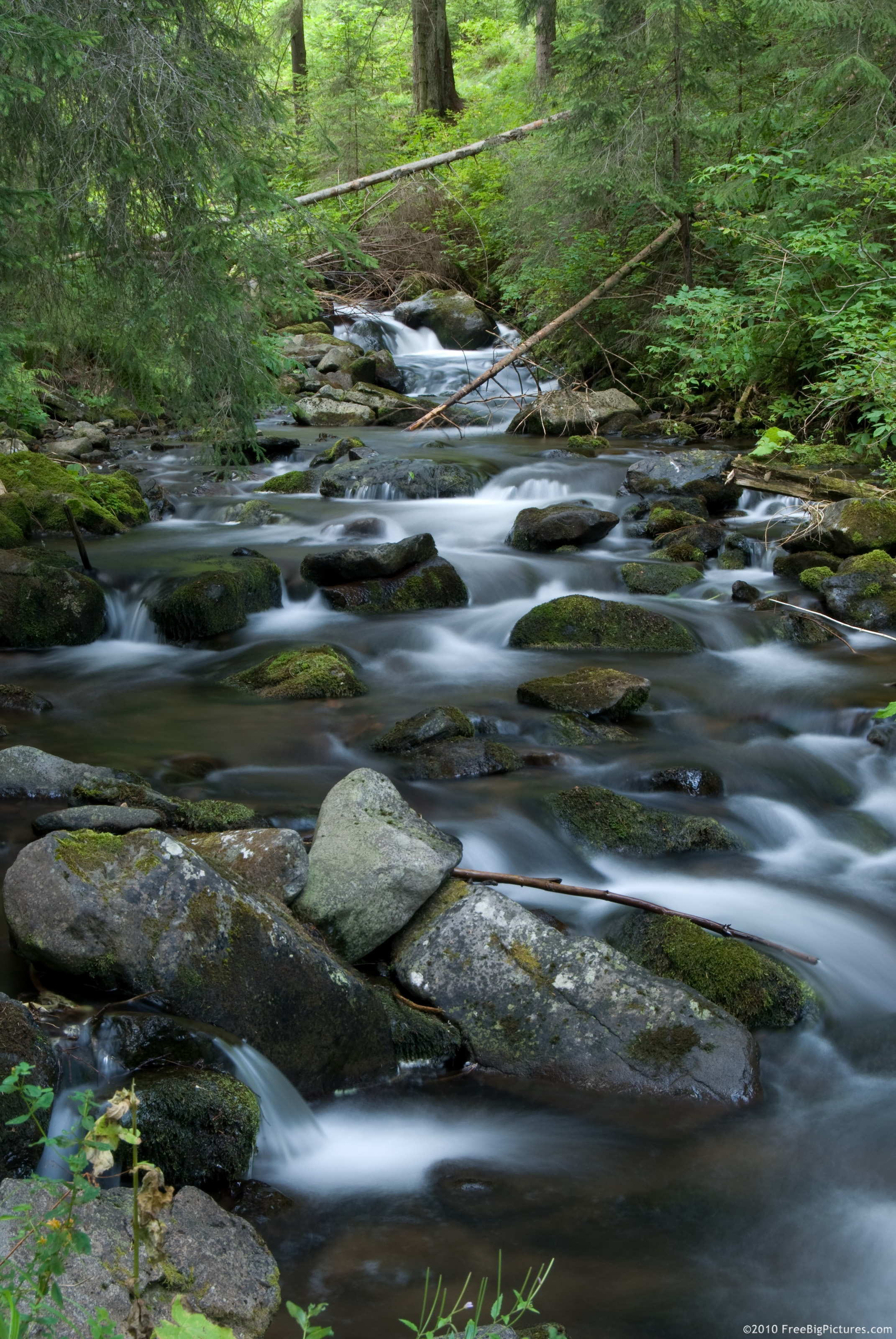 Coldwater Streams -