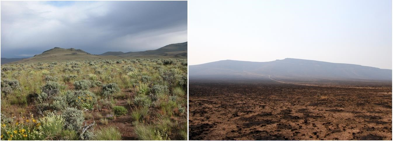 Impact of fire on the sagebrush ecosystems of south-eastern Oregon after the Long Draw fire, 2012. Left is before and right is after the fire. Imagery retrieved from Bureau of Land Management and Davies et al., 2014