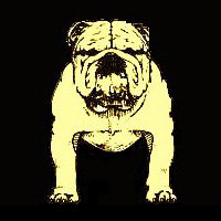 Conformation_Bulldog_11.jpg