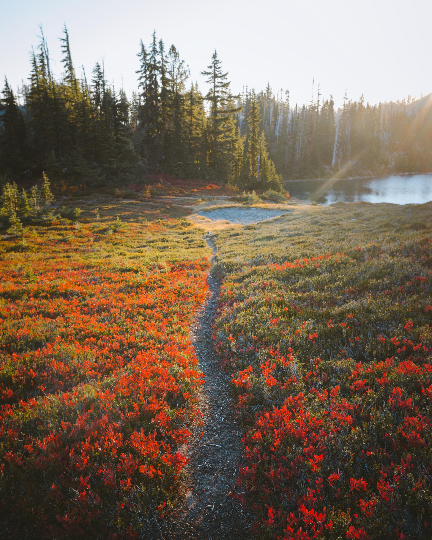 TrailShotMinotaur.jpg