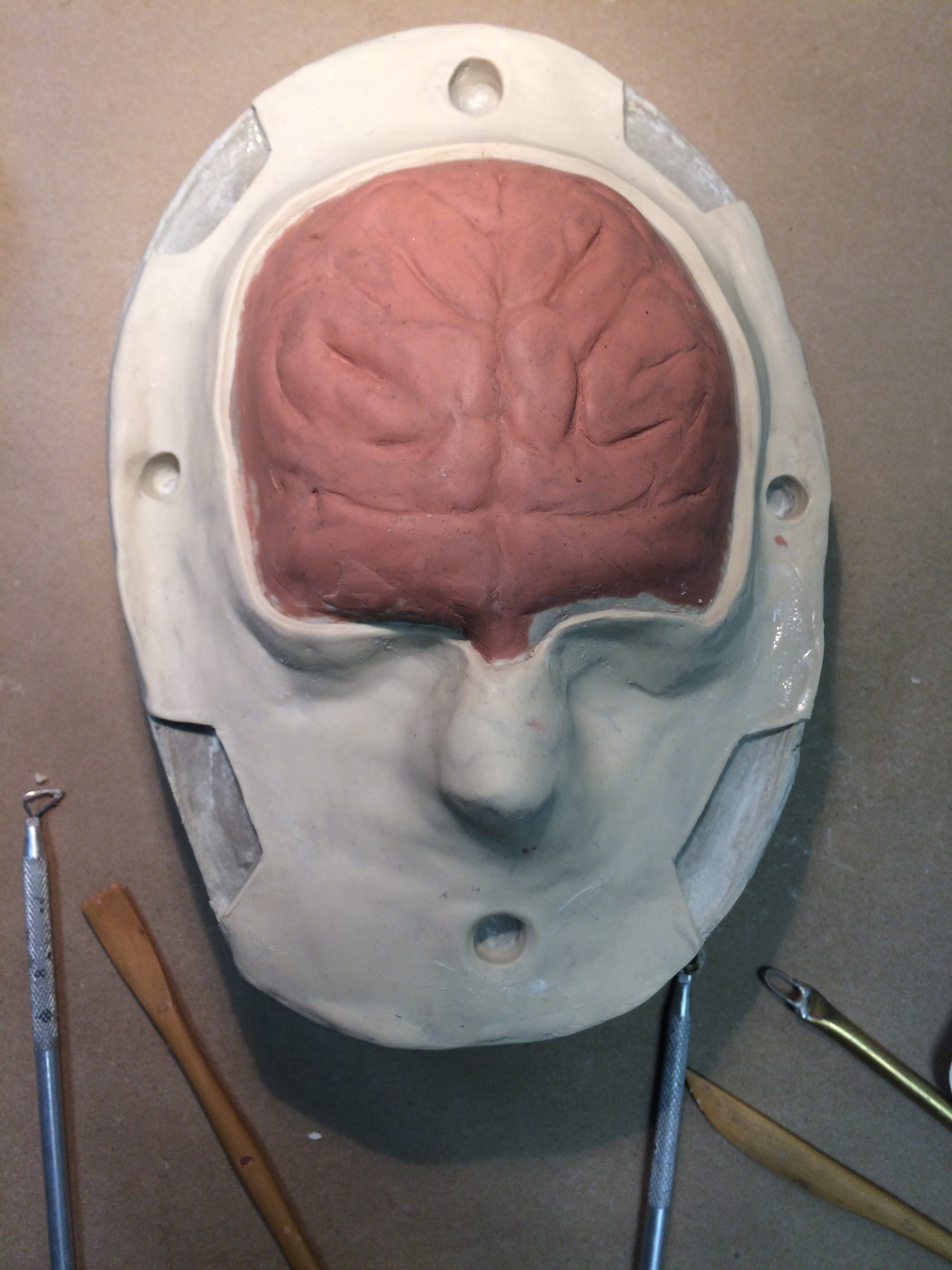 brain forehead sculpt