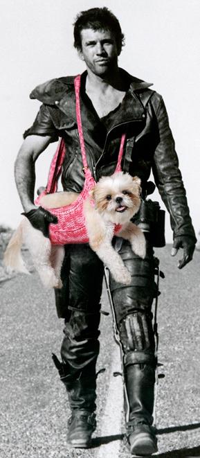 roadwarrior+doggie.png