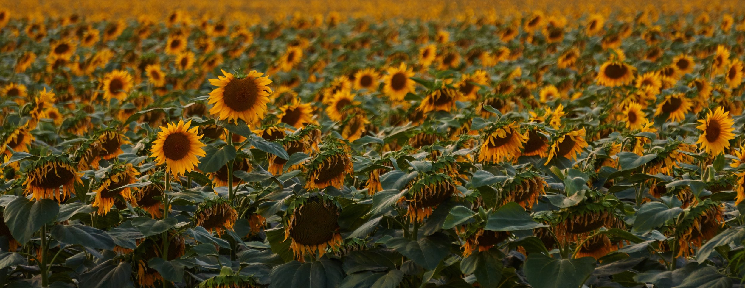 """""""Out beyond ideas of wrongdoing and rightdoing,there is a field.I'll meet you there."""" - - Rumi"""