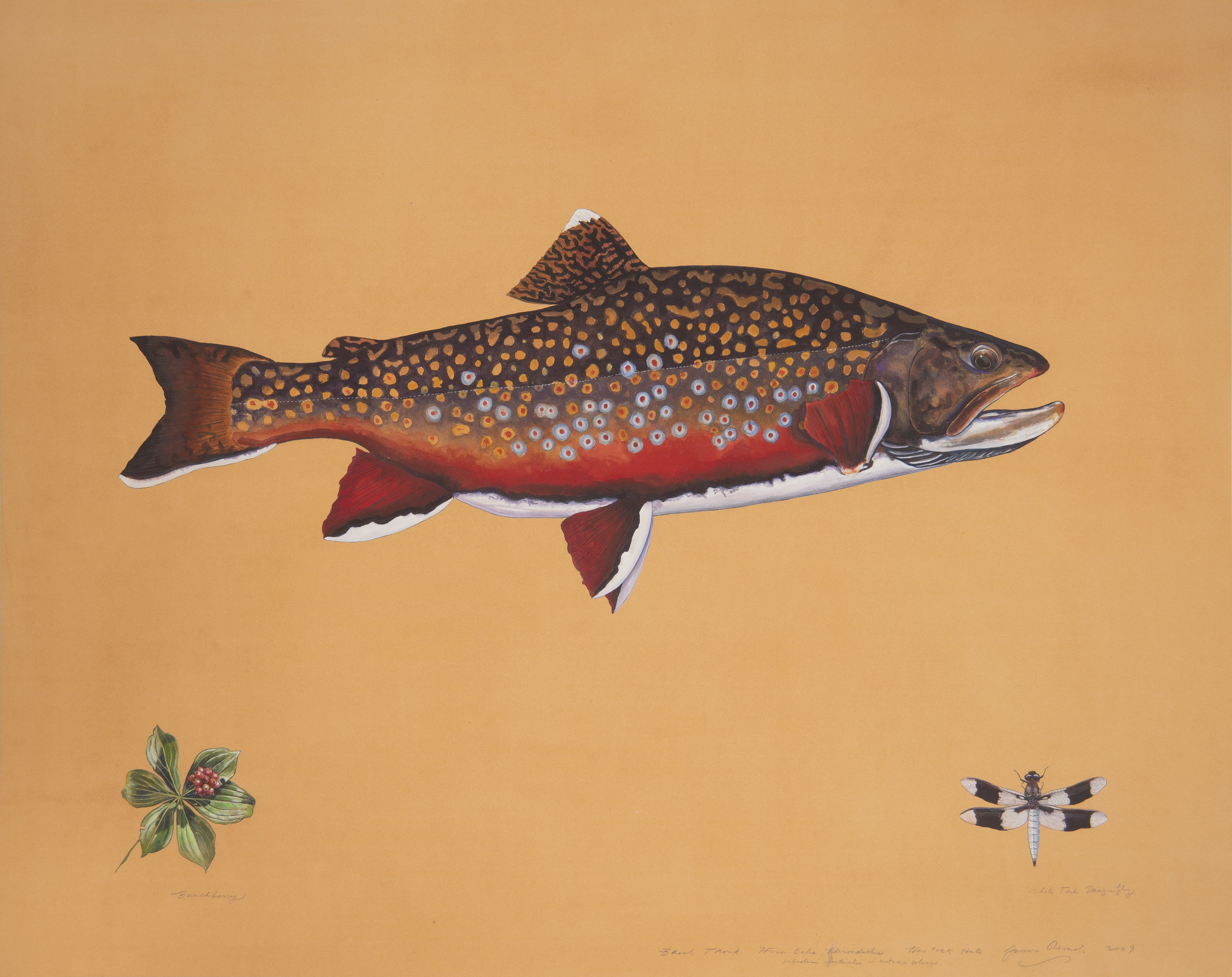 James Prosek - Trout Swim Drink Fish Gala.jpg