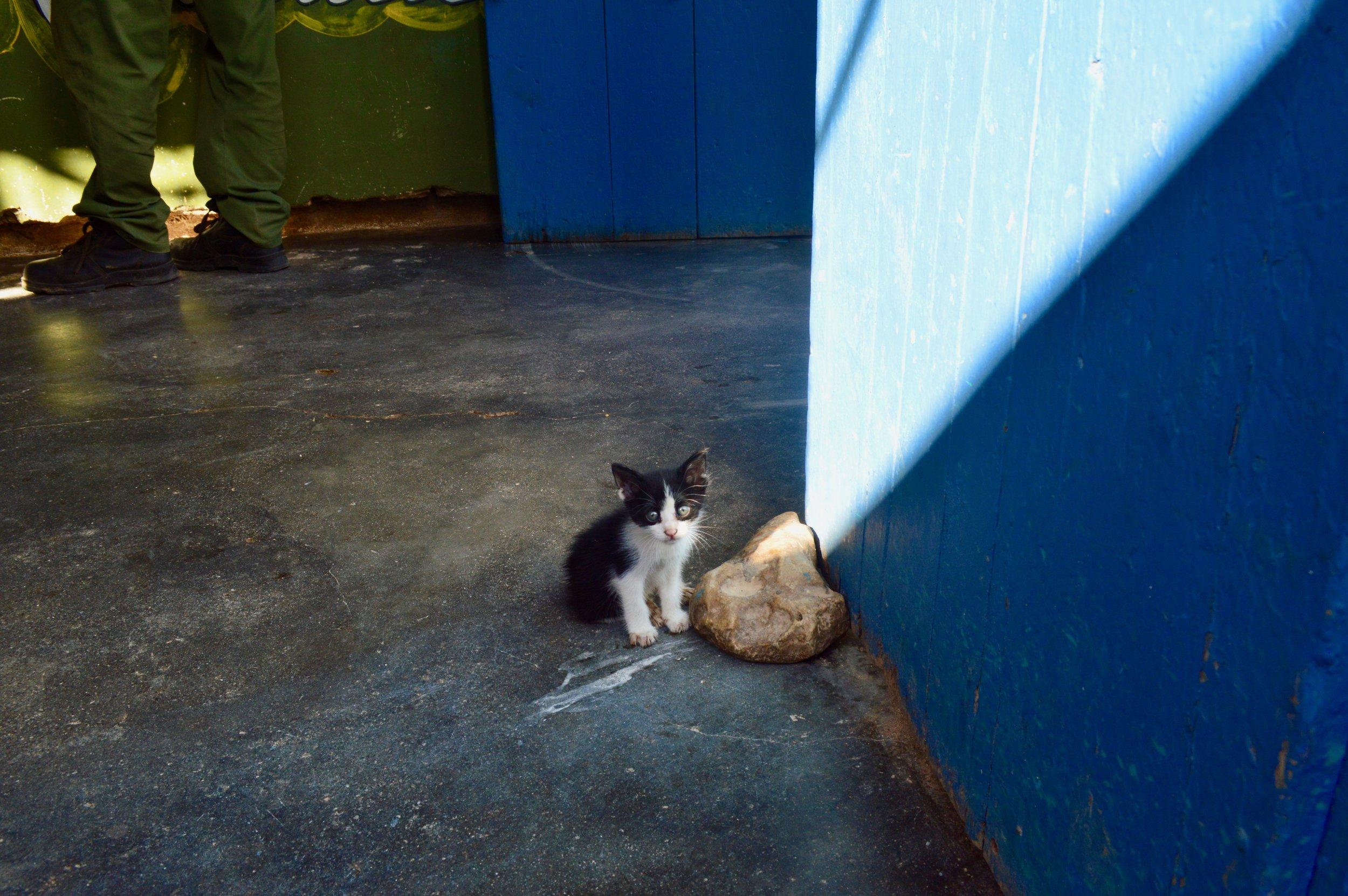 Trinidad- gatito.jpg