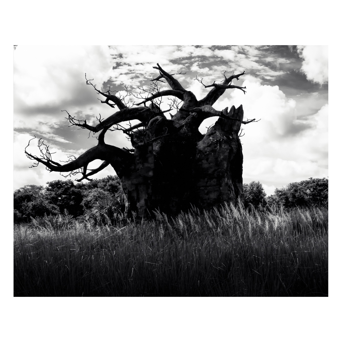 Safari Tree-0001-Brian Suman Photography.jpg