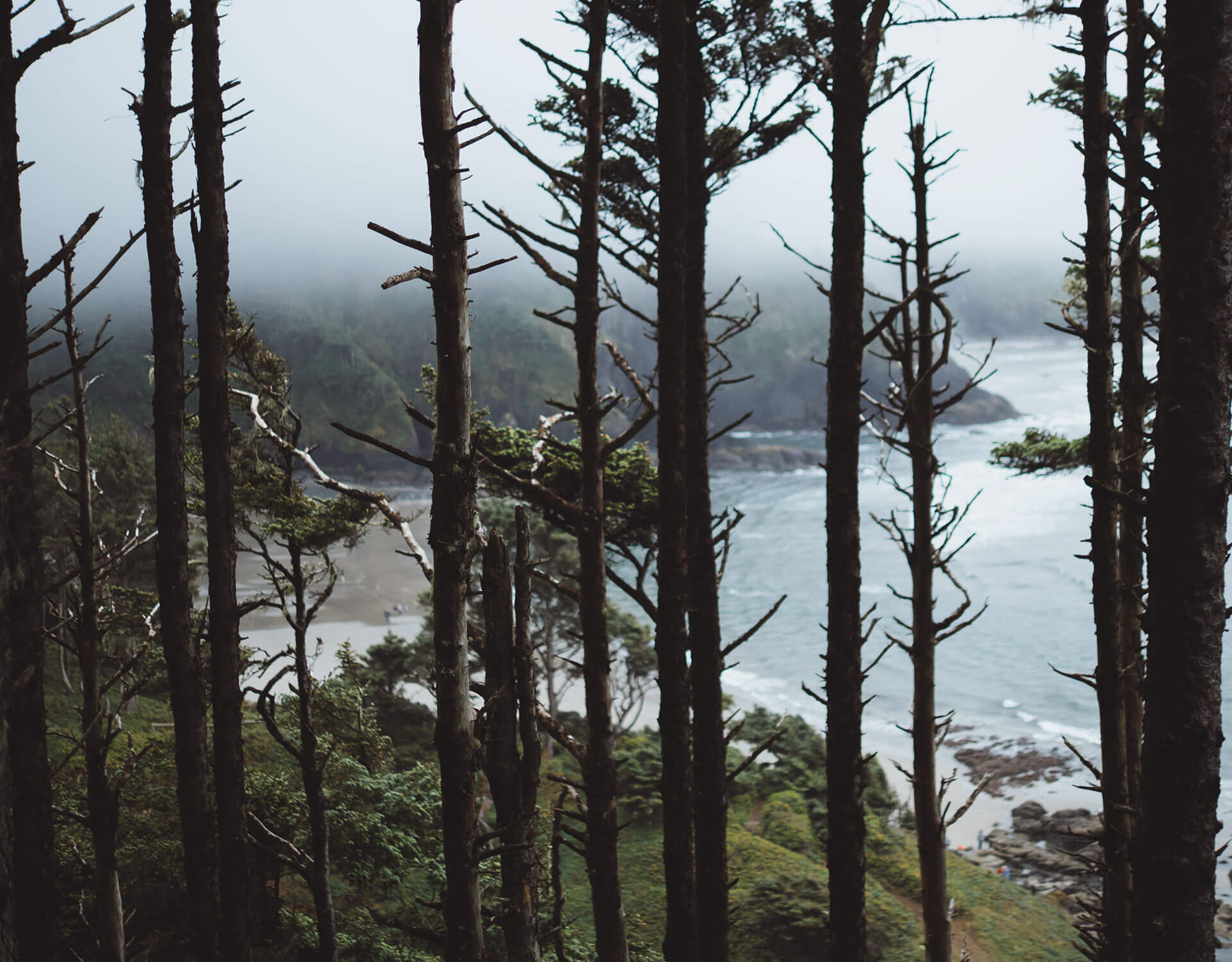 Heceta Head Lighthouse overlook.