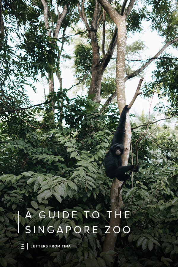 A Travel Guide to the Singapore Zoo.