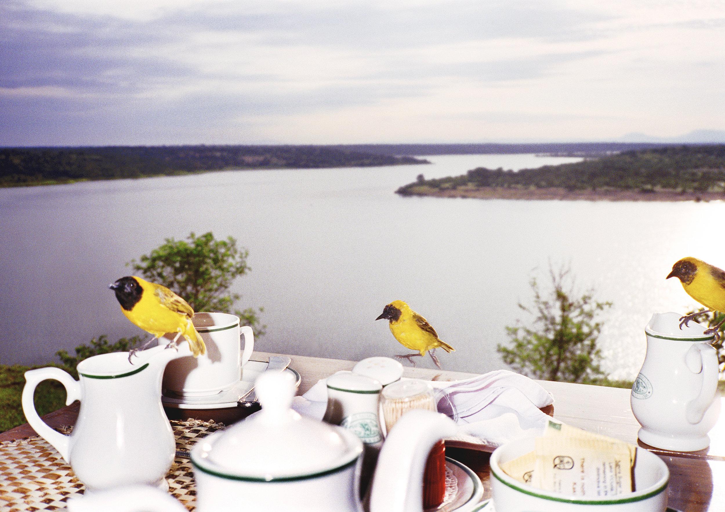 yellowbirds.uganda.portfolio.jpg