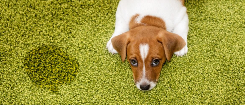 Pet Spot & Odor Removal -