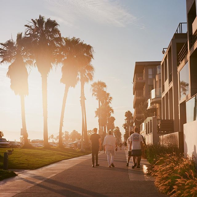 We may have only had half an hour, but there are way worse places to photograph other tourists than Venice Beach.  #kodak #kodakfilm #ektar100 #kodakektar  #analogue #analoguelife #analogueculture #analoguefilm #analoguephoto #grainisgood #ishootfilm #istillshootfilm #filmisnotdead #filmphotography #staybrokeshootfilm #chasingthelight #35mmfilm  #exploremore #getouthere #getoutstayout #exploretocreate #wanderlust #venicebeach #venice #tlr #yashica
