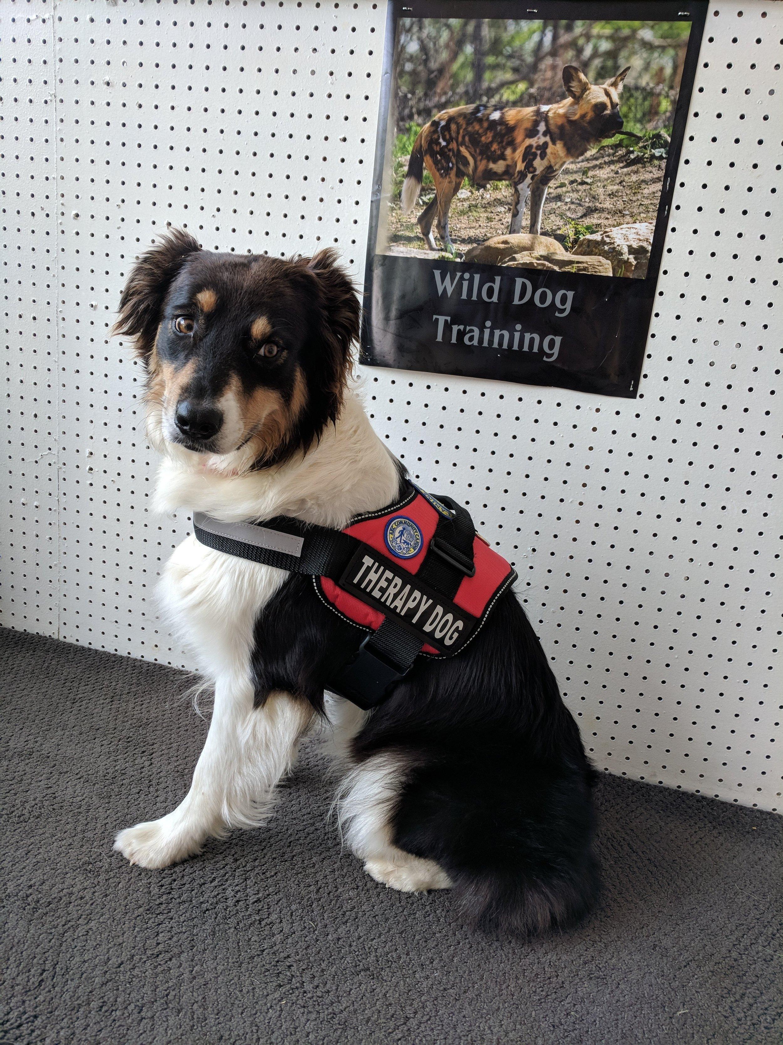 wilddogtherapy3.jpg