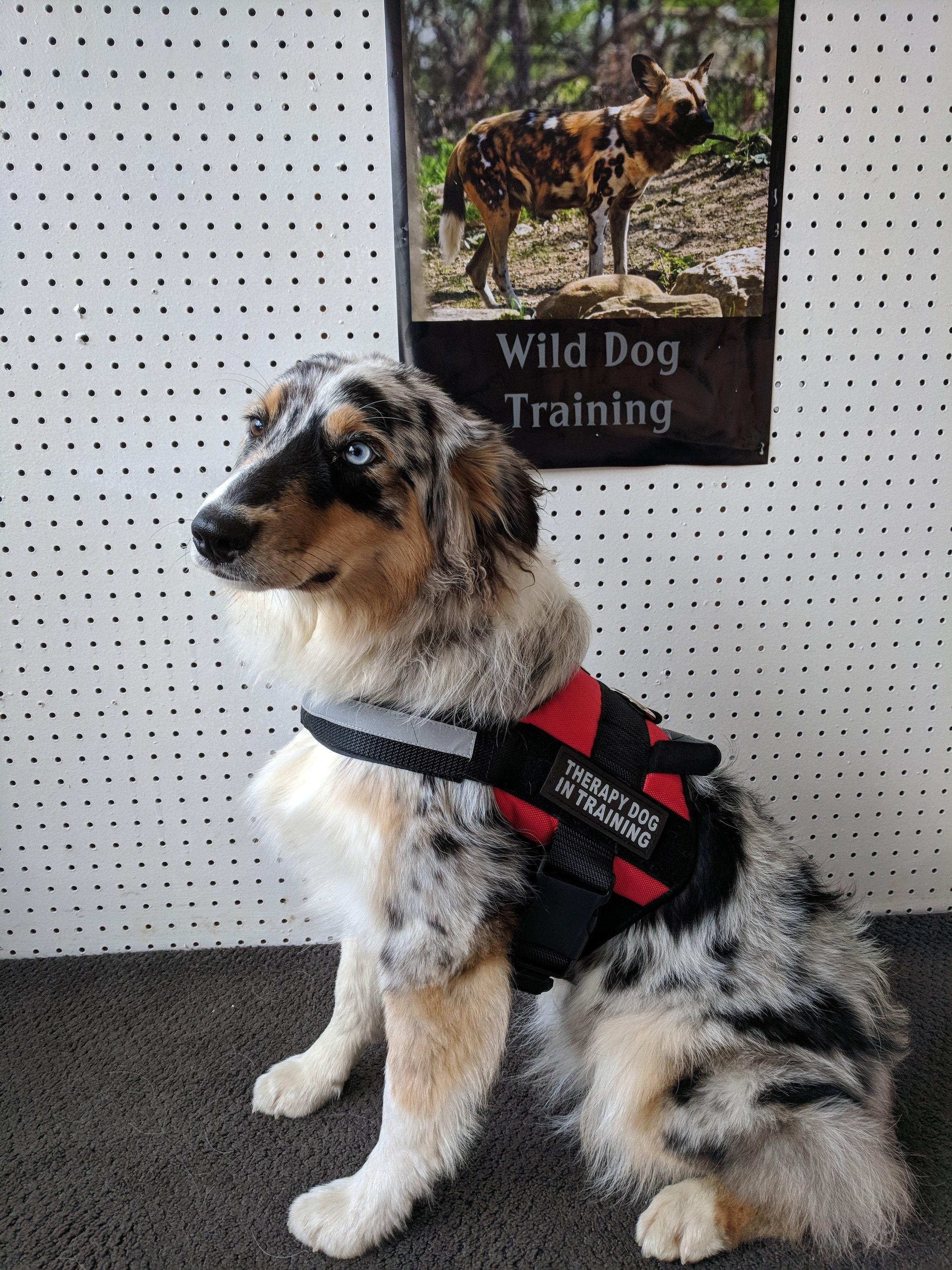 wilddogtherapy2.jpg