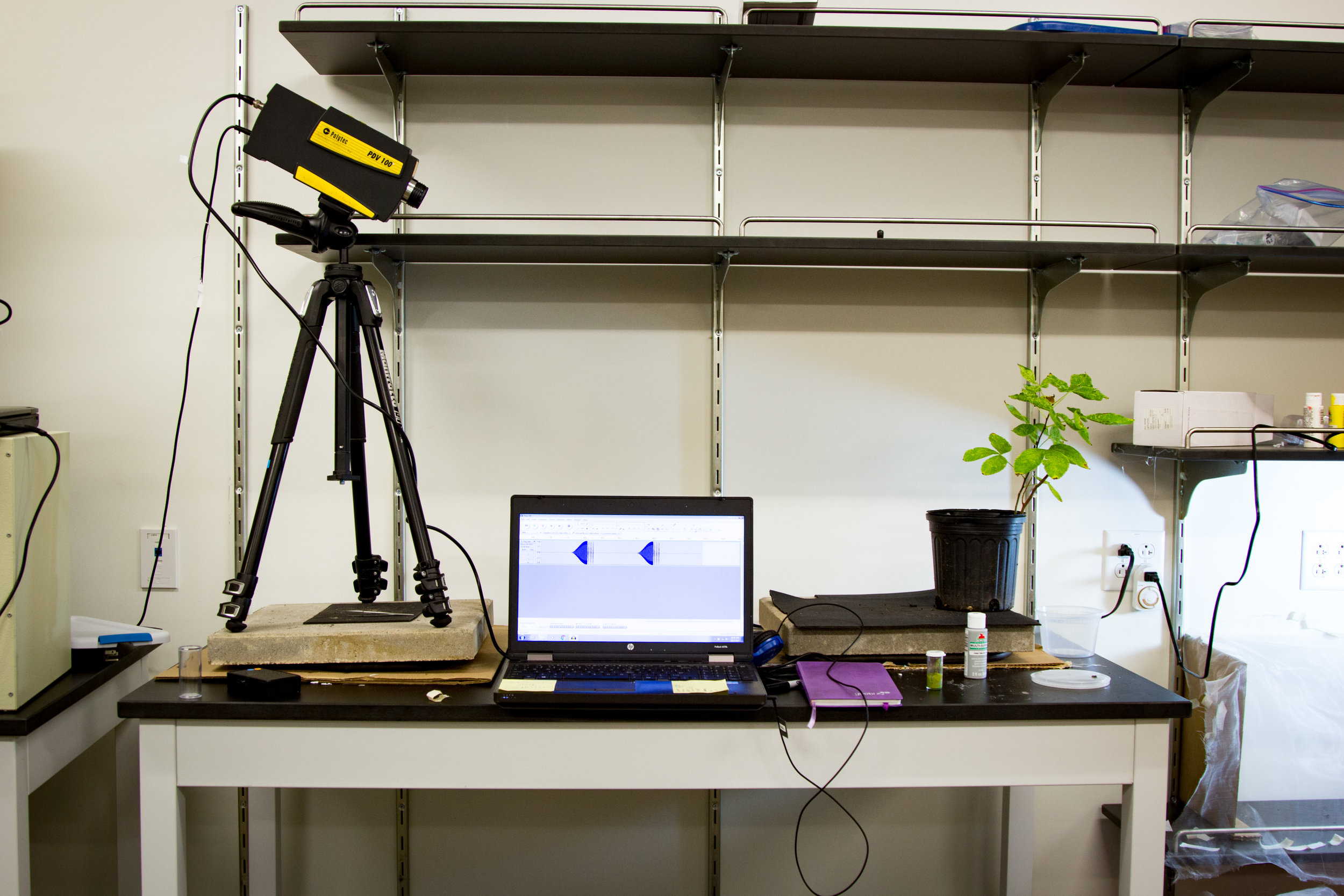 To study vibrational signals, our lab uses a specialized laser recording device to capture the sounds of insect movement on the stems and leaves of plants. Photo:  Impact Media Lab
