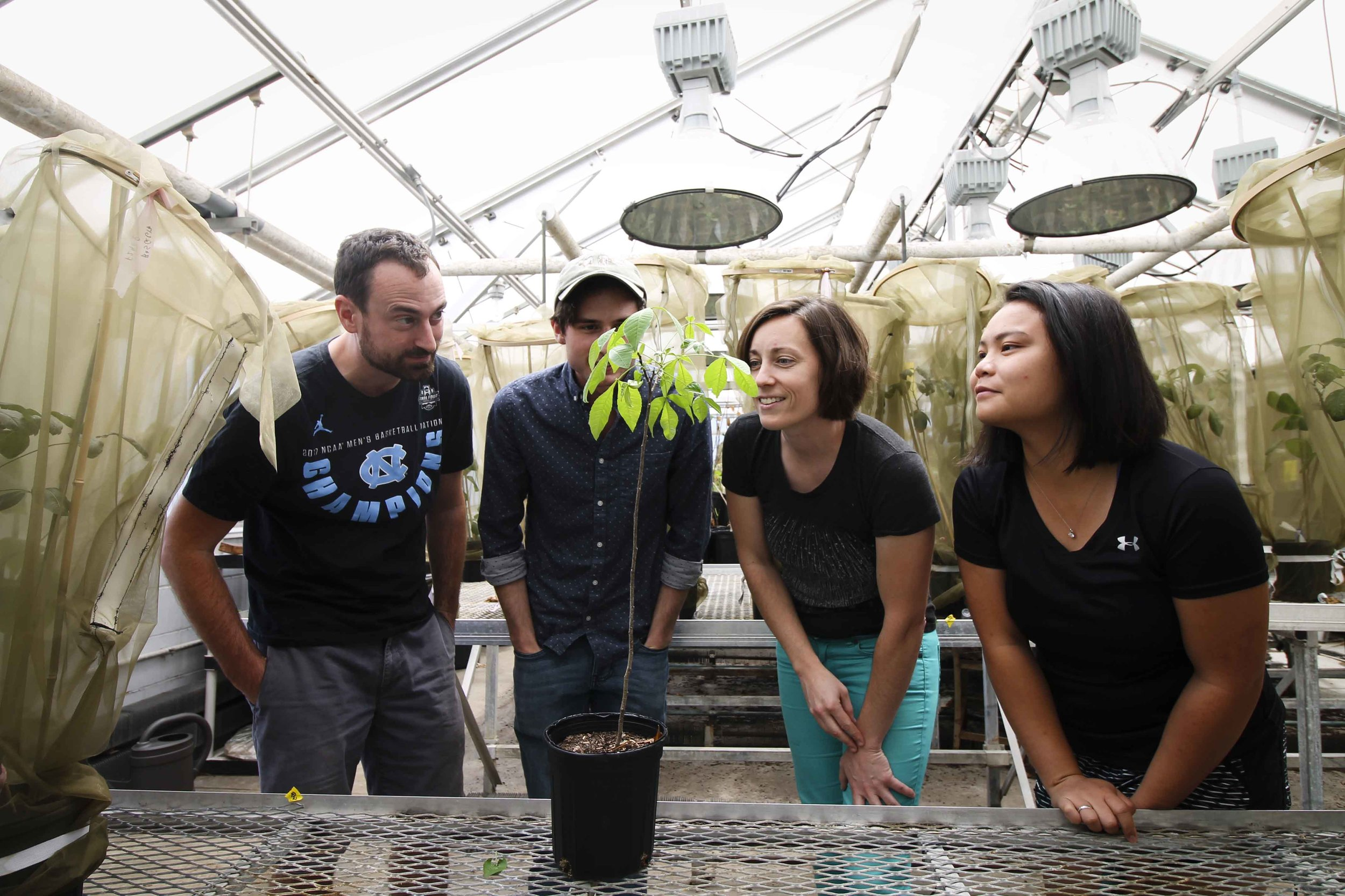 Team treehopper poses with a host plant in the greenhouse. Our lab uses a variety of arachnid and insect study systems, which we maintain in the lab and and greenhouse. Photo: Emily Hutti