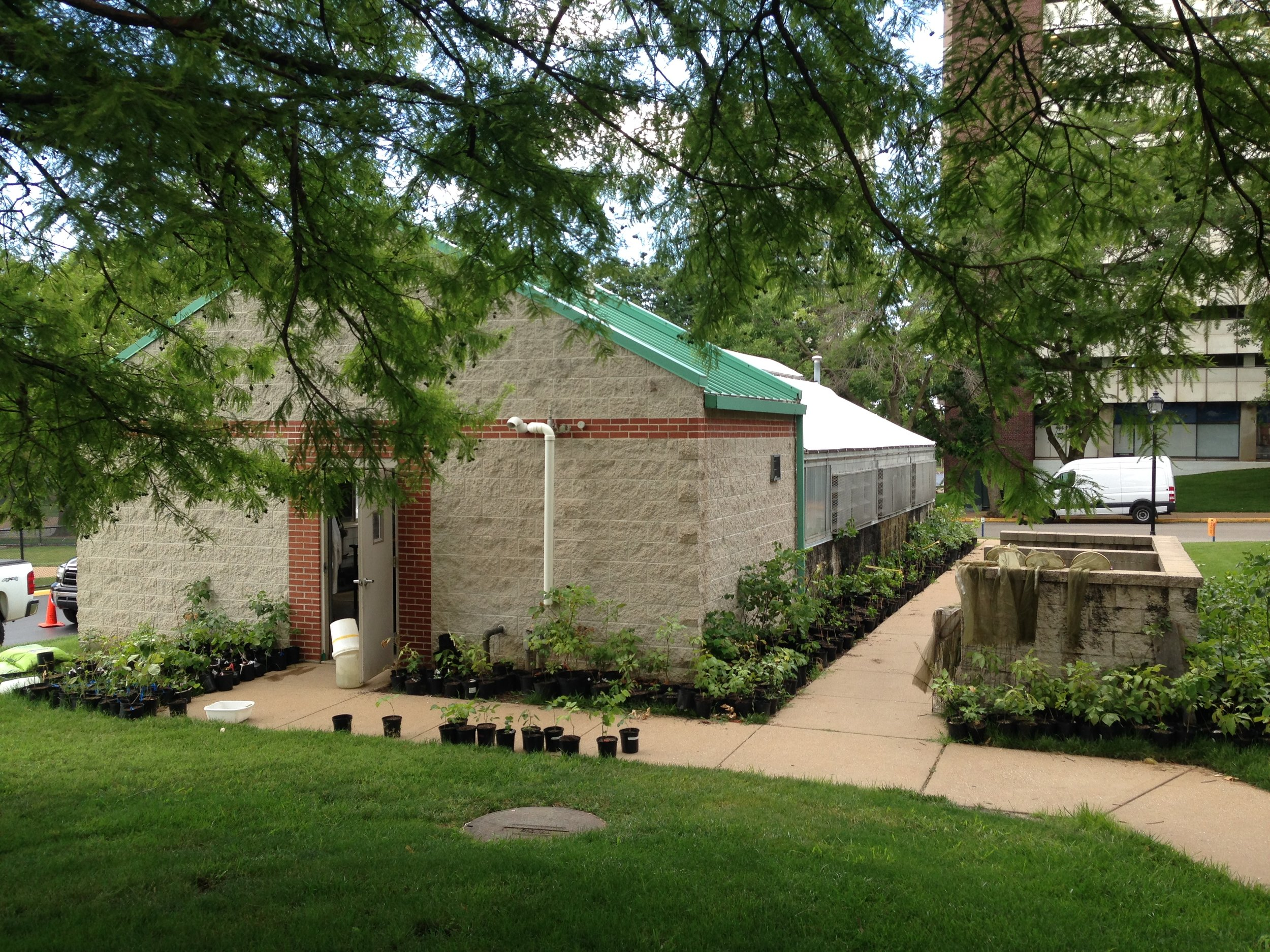 Saint Louis University's greenhouse