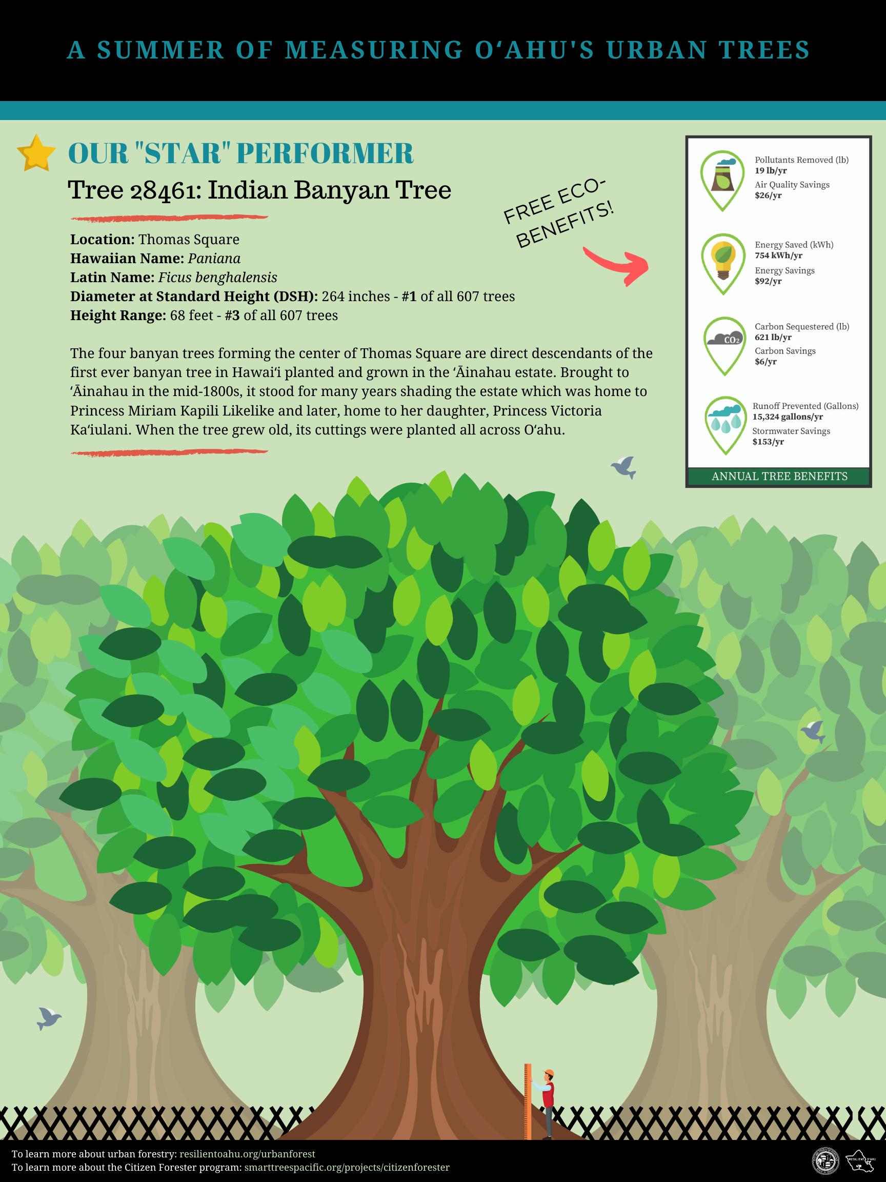 Citizen Forester Statistics Sheet (1).png