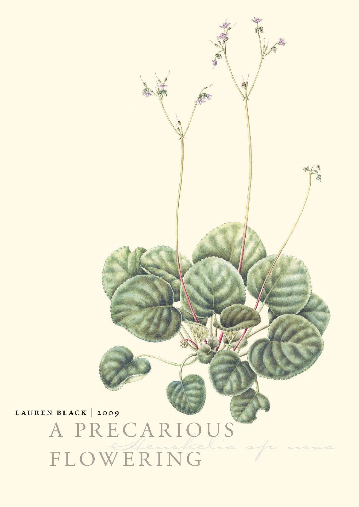 A Precarious Flowering — 2009   Rimbun Dahan 1 year Artist Residency, Kuala Lumpur Malaysia