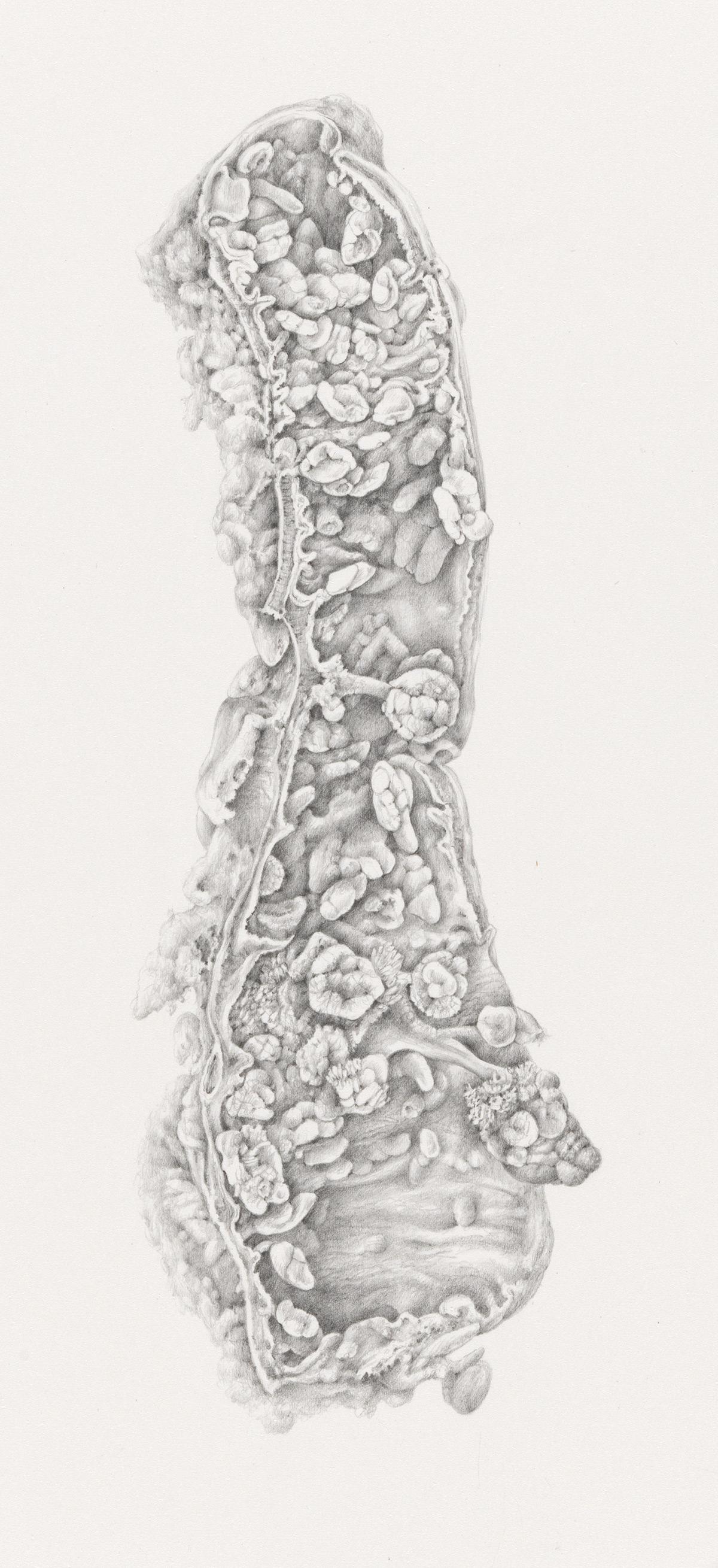 drawing05.jpg