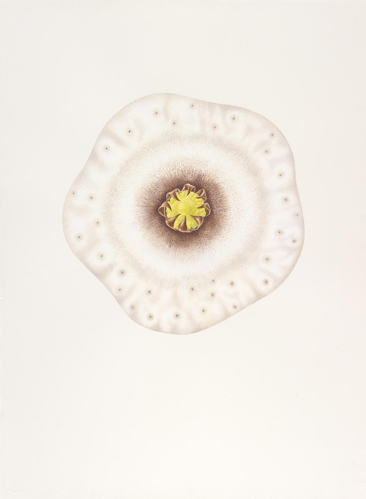 muscorum01.jpg