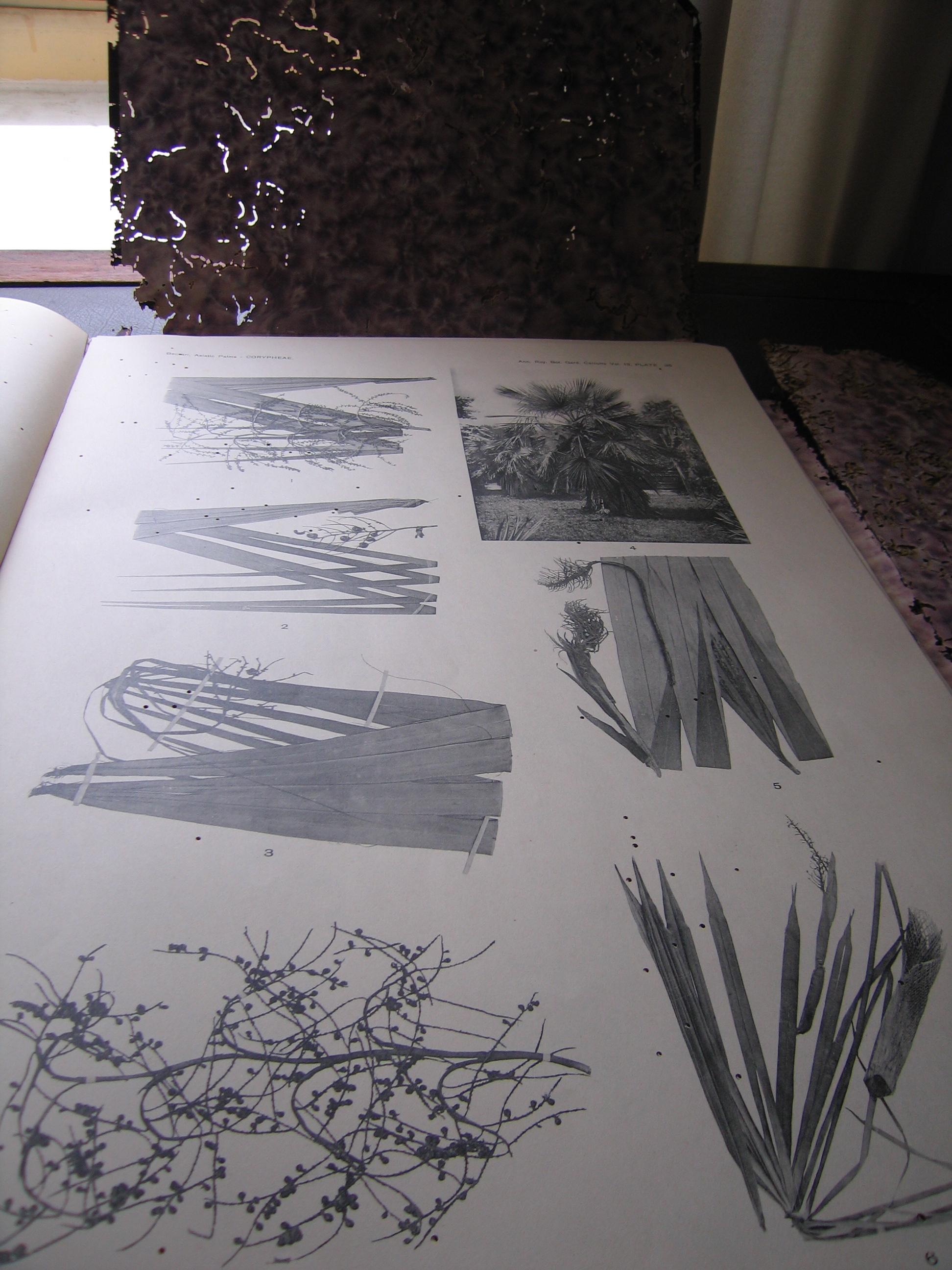 Herbarium library.JPG