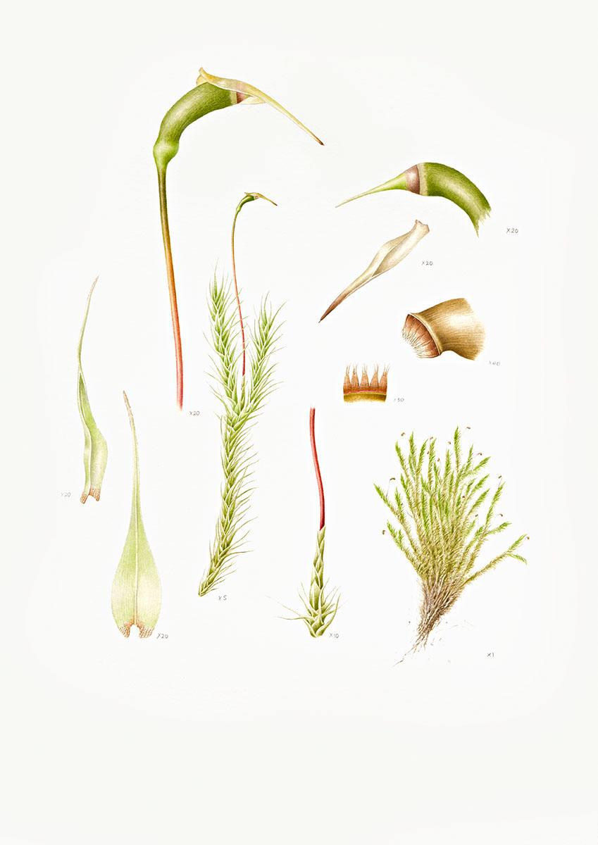 Elphin Moss.jpg