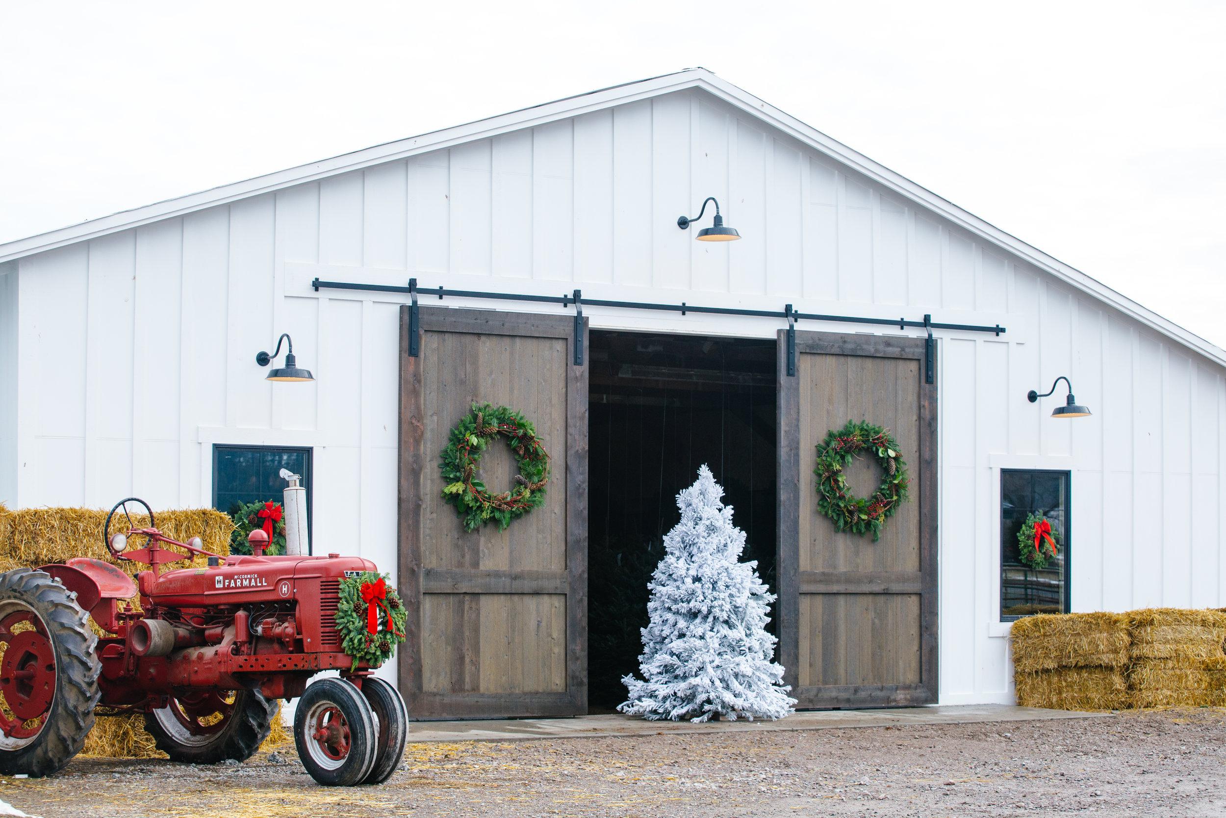 Snowline-Tree-Farm-Christmas-Wreaths-Trees-78.JPG