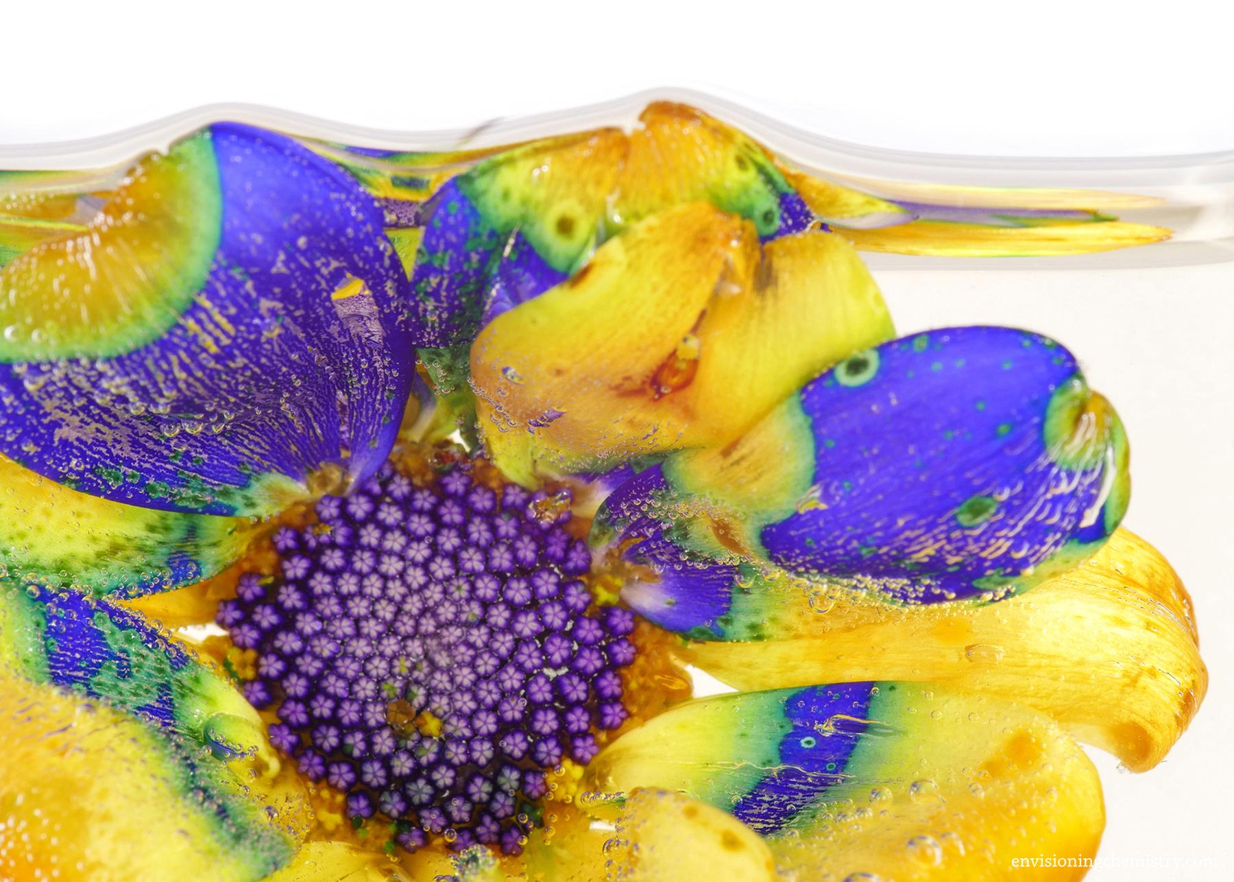 Flowers&Colors_0001.jpg